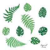 Vector illustration of fern and monstera leaves. Vector botanical illustration of fern and monstera leaf. Isolated outline modern drawing of tropical plant. Set Stock Image