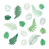 Vector illustration of fern and monstera leaves. Vector botanical illustration of fern and monstera leaf. Isolated outline modern drawing of tropical plant. Set Royalty Free Stock Photos