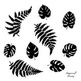 Vector illustration of fern and monstera leaves. Vector botanical illustration of fern and monstera leaf. Isolated outline modern drawing of tropical plant. Set Royalty Free Stock Image