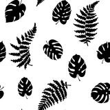 Vector illustration of fern and monstera. Vector botanical illustration of fern and monstera leaf. Isolated outline modern drawing of tropical plant. Set of Royalty Free Stock Image