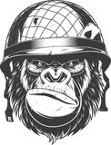 Gorilla in the military helmetn Stock Photo