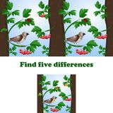 Vector illustration find 5 differences in the picture with the sparrow royalty free illustration