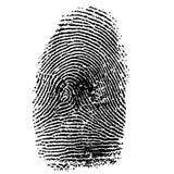 Vector illustration of fingerprint Stock Photo