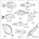 Vector illustration of fish Royalty Free Stock Image