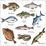 Vector illustration of fish. Fish collection: Dorado, Fish Eel, Tuna, Salmon, Halibut, Herring, Sea bass, Cod, Sturgeon. Vector illustration of fish for design Royalty Free Stock Photo
