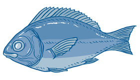 Vector illustration fish Stock Images