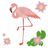 Vector Illustration of a Flamingo Stock Photography