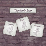 Vector illustration of flashcard with  vegetable herb: mint, oregano, spinach on a brick backdrop Stock Images