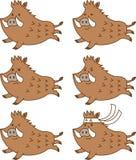 Cute running wild boar facial expressions set.Emotions happy,anger,gallant.Vector illustration.Flat design.Cartoon character set. stock illustration