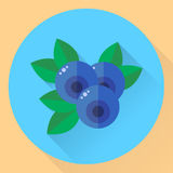 Vector illustration, flat round icon blueberries, bilberry, blue Stock Images