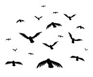 Vector illustration a flock of flying birds. starlings.  Royalty Free Stock Images