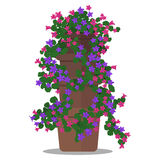 Vector illustration of floral arrangement in pot. Vector colorful illustration of floral arrangement in pot Stock Photos