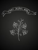 Chalk flower on blackboard Royalty Free Stock Image