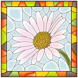 Vector illustration of flower chamomile. Royalty Free Stock Photography