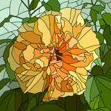 Vector illustration of flower hibiscus (Chinese rose). Royalty Free Stock Photos