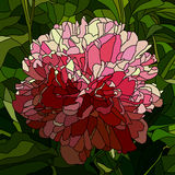 Vector illustration of flower peony. Royalty Free Stock Image