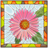 Vector illustration of flower pink aster. Royalty Free Stock Images