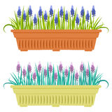 Vector illustration with flower pot in flat style. Stock Photography