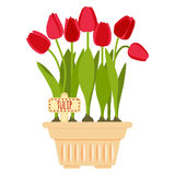 Vector illustration with flower pot and tulip Stock Photography