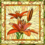 Vector illustration of flower red lilies. Royalty Free Stock Images