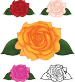Vector illustration of flower rose Stock Photography