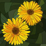 Vector illustration of flower yellow calendula. Royalty Free Stock Photos