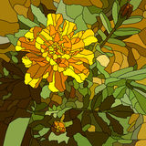 Vector illustration of flower yellow marigold. Stock Photo