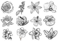 Vector illustration of flowers (black and white) Royalty Free Stock Photography