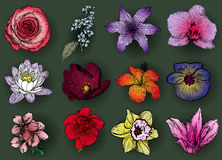 Vector illustration of flowers Royalty Free Stock Images