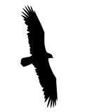 Vector illustration flying birds. On white background Stock Image