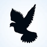 Vector illustration Flying dove Royalty Free Stock Photography