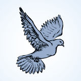 Vector illustration Flying dove Royalty Free Stock Images
