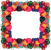 Vector illustration of frame from the berries royalty free illustration