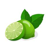 Vector illustration of fresh limes Stock Photography