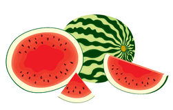 Vector illustration of , fresh, whole watermelon, half and slices of watermelon in color Royalty Free Stock Image
