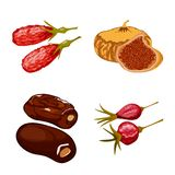 Vector illustration of fruit and dried  icon. Collection of fruit and food  vector icon for stock. Isolated object of fruit and dried  symbol. Set of fruit and stock illustration