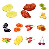 Vector design of fruit and dried logo. Set of fruit and food vector icon for stock. Vector illustration of fruit and dried icon. Collection of fruit and food stock illustration
