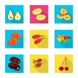Vector illustration of fruit and dried  icon. Set of fruit and food  vector icon for stock. Isolated object of fruit and dried  symbol. Collection of fruit and vector illustration