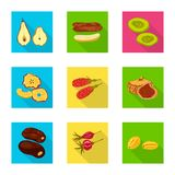 Vector illustration of fruit and dried  logo. Set of fruit and food  vector icon for stock. Isolated object of fruit and dried  icon. Collection of fruit and stock illustration