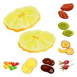 Vector illustration of fruit and dried  sign. Collection of fruit and food  stock symbol for web. Isolated object of fruit and dried  logo. Set of fruit and vector illustration