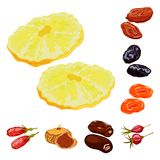 Vector illustration of fruit and dried  sign. Set of fruit and food  stock vector illustration. Isolated object of fruit and dried  logo. Collection of fruit vector illustration
