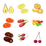 Vector design of fruit and dried  icon. Set of fruit and food  stock symbol for web. Vector illustration of fruit and dried  symbol. Collection of fruit and stock illustration