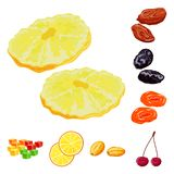 Vector design of fruit and dried  icon. Set of fruit and food  stock vector illustration. Vector illustration of fruit and dried  symbol. Collection of fruit vector illustration