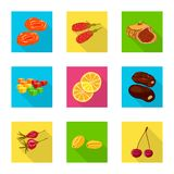 Vector illustration of fruit and dried  symbol. Set of fruit and food  stock vector illustration. Isolated object of fruit and dried  sign. Collection of fruit stock illustration