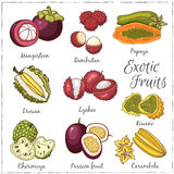 Vector illustration of Fruits Stock Photography
