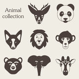 Vector illustration of funny animal icon set Stock Images