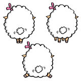 Backs of funny sheeps Stock Image