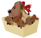 Vector illustration. Funny dog with puppies in a box. Royalty Free Stock Image