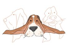 Vector illustration funny dog thoroughbred on a white background. Drawing of Basset Hound Stock Images