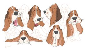 Vector illustration funny dog thoroughbred on a white background. Drawing of Basset Hound Stock Photo